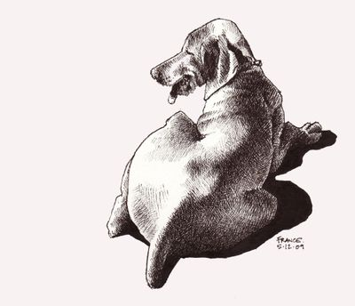 Dog, Pigma, sketchbook