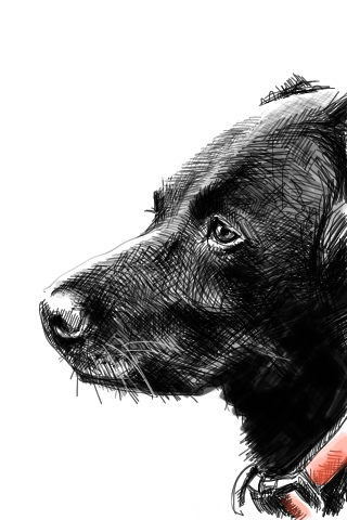 Dog with Brushes app