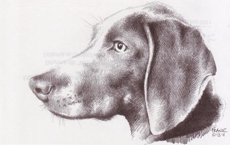 Geraldine's chien for blog