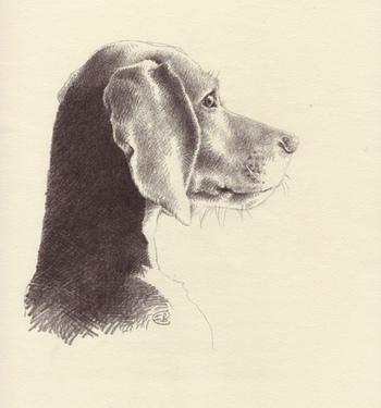 Jasper_asnees_beagle_4