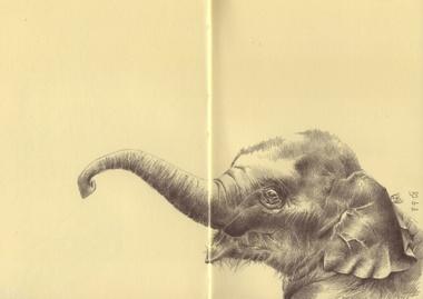 Elephant_in_moleskine
