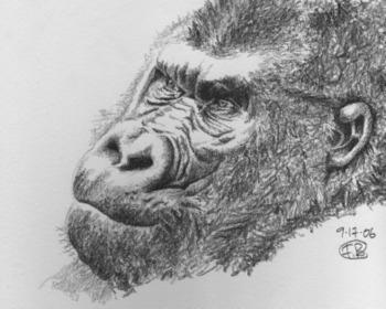 Gorilla_2_2